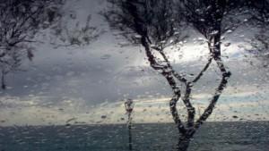 vant si ploi
